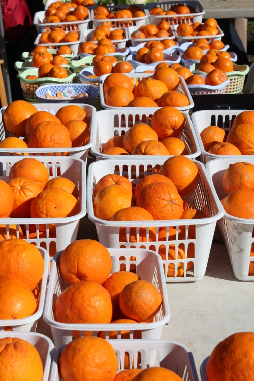 Trays of Oranges at the Abbotsford Market in Melbourne