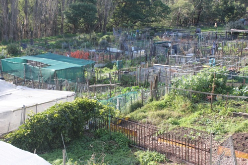 Vegetable Gardens at Collingwood Children's Farm in Melbourne