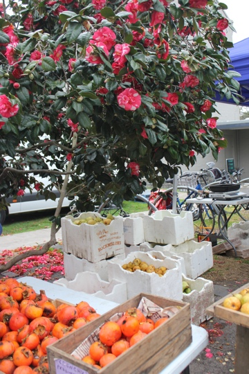 Persimmons under the camellia tree at the Abbotsford Convent Market in