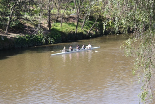 Rowers on the Yarra River, Melbourne