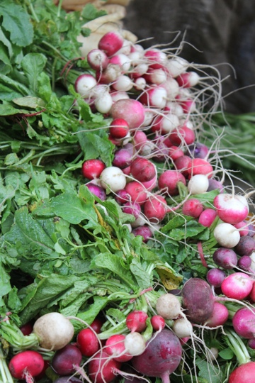 Radishes at the Collingwood Children's Farm Market in Melbourne
