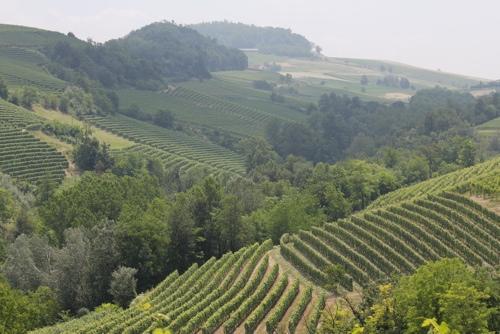Countryside around Monforte d'Alba