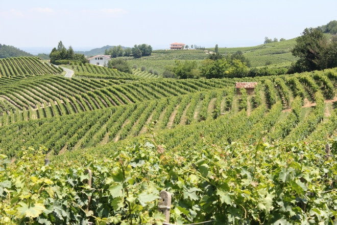 Vine covered hills of Piedmont