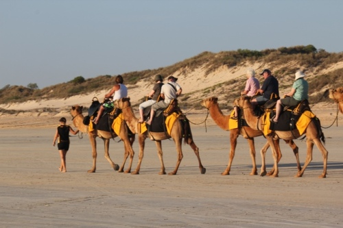 Camels on Cable Beach, Broome
