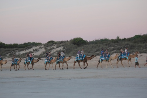 Camels returning home on Cable Beach, Broome