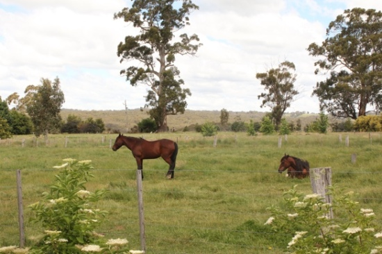 Horses at Paul Bangay's Garden, Stonefields